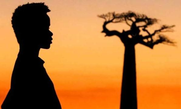 baobabs ETALONNE PAR JEAN MICHEL PETIT sur DAVINCI RESOLVE 11